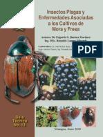 Insectos y Plagas Asociadas Al Cultivo de Mora
