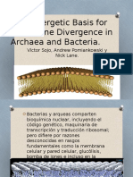 A Bioenergetic Basis for Membrane Divergence in Archaea y Bacterias