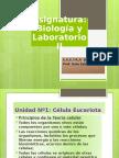 Célulaeucariota (2)