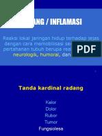 inflamasi1