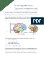 Anatomi Otak & Fungsinya
