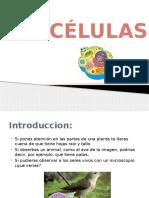 ciencia celula (3)