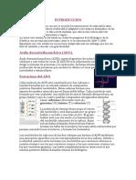 INTRODUCCION ADN ARN.docx