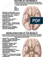 Neuro 5 Gross Structure of the Brain IV 2013