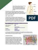 Sistema Linfático, Anatomía