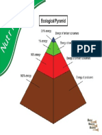 1c_NUTRITION_Ecological Pyramid.pdf