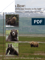 Brown Bear Identifying Males Females in Field