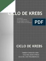 Ciclo-De-krebs-eve Listo Para Exponer - Copia