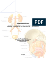 Anatomía_Urogenital-1