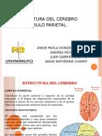 Presentacion Lobulo Parietal Uniminuto