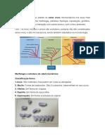 Aula 1_Introdução e Estrutua Bacteriana