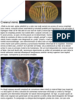 Creierul inimii