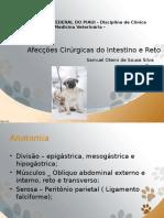 Afecções cirugicas do intestino e reto. pptx.pptx