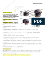 Resumen Flase Embrio SISTEMA DIGESTIVO