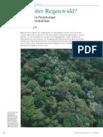 Regenwald 22 29