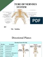 Division of Brain2