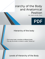 Hierarchy of the Body and Anatomical Position
