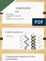 Adn y Expresion Genética