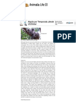 Koala history and some interesting facts.pdf