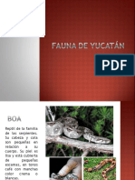 Fauna de Yucatán