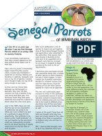 Keeping Senegal Parrtos