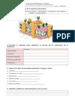 Guía Ciencias Naturales Membrana Plasmatica2