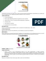 12 TIPOS DE INSECTOS-ENTOMOLOGIA