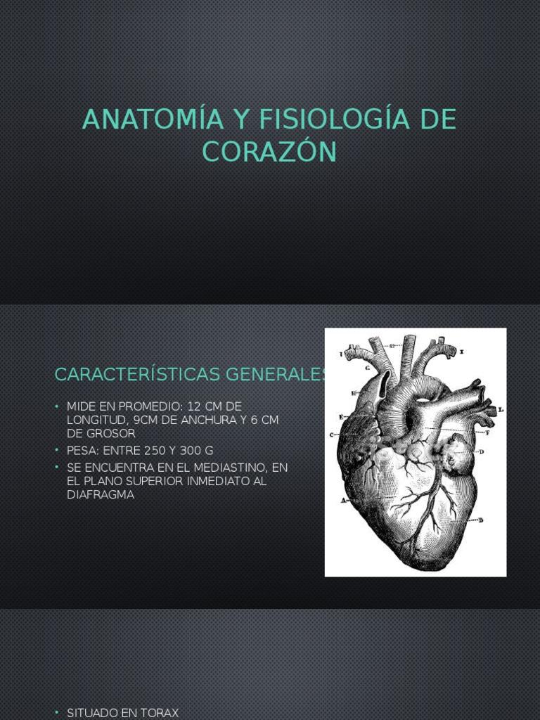Anatomía y Fisiología de Corazón