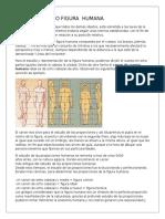 Canon y Dibujo Figura Humana