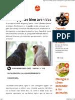 Perros y Gatos Bien Avenidos Affinity Petcare
