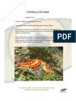 Estrella de mar.pdf