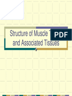 Structure of Muscle Tissue II