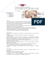 Resumen de sistema  Nervioso