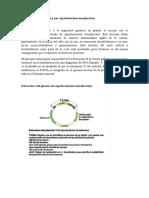 Transformación Genética Por Agrobacterium Tumefasciens