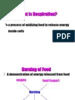 BioF4C7-Respiration.ppt