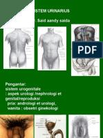 anatomi urogenetalia