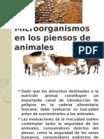 Microorganismos en Los Piensos de Animales