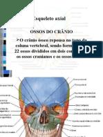 esqueleto  axial ossos do crânio e coluna