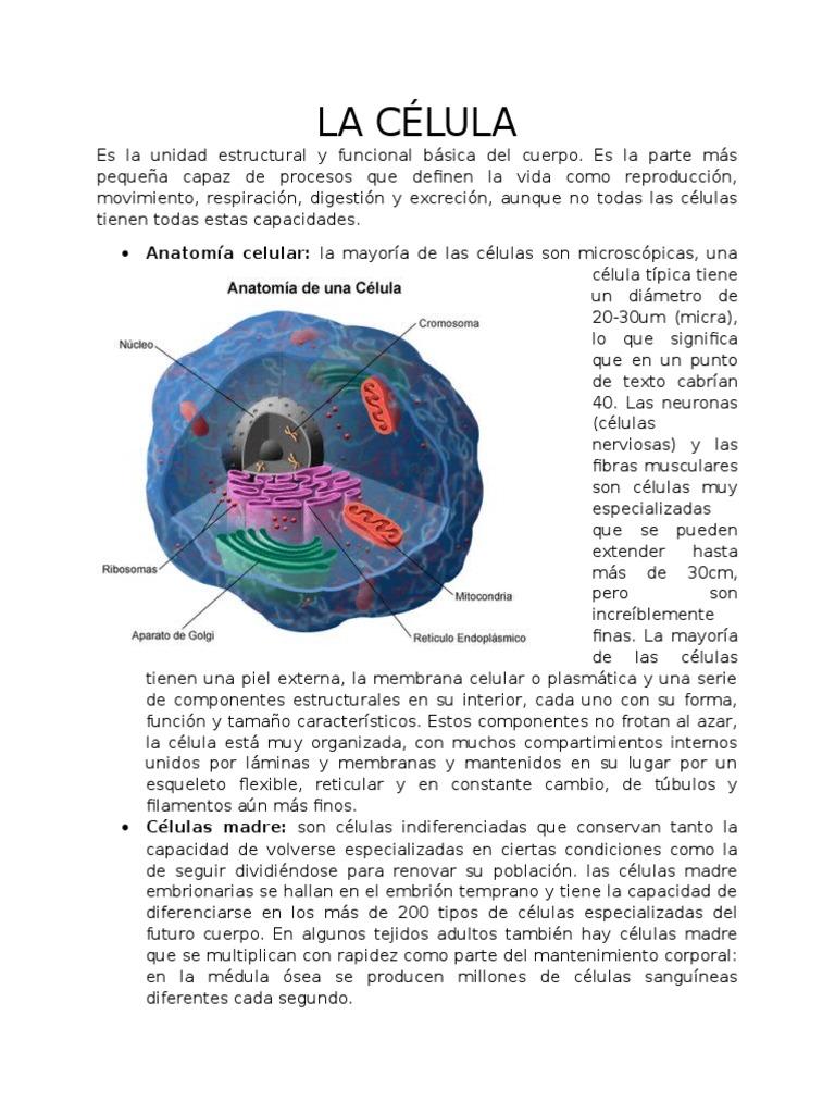 Dorable Anatomía Y Fisiología Definen Motivo - Anatomía de Las ...