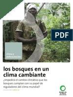 Los bosques en un clima cambiante