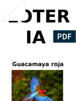 Loteria Selva