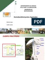 Agaricales.pdf