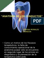 Anatomía de Los Conductos 1ra Parte