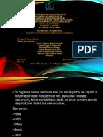 Organos de Los Sentidos Presentacion