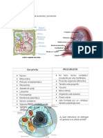 Diferencia Entre Celula Eucariota y Procariota 131111101826 Phpapp02