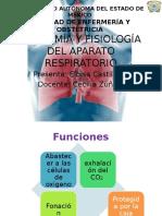 Anatomia y Fisiología Del Aparato Respiratorio