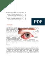 astenopia.docx