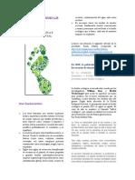 2.1. Huella Ecológica e Impacto Ambiental