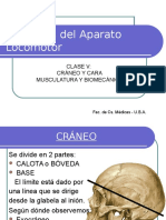 C5-CabezaMúsculosBiomecánica2009 (3)