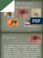PICADURAS Y MORDEDURAS SARA.ppt
